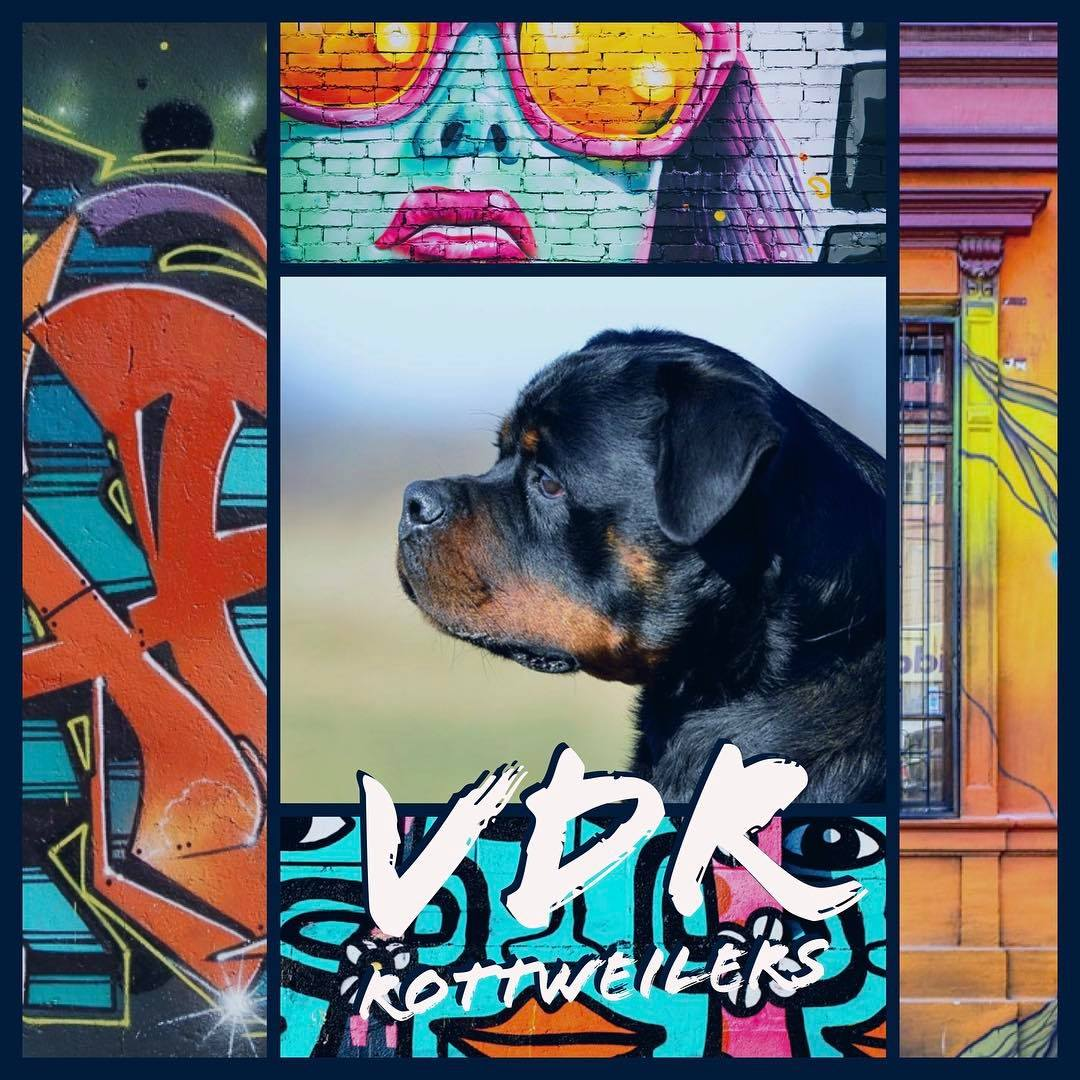VDR Rottweilers